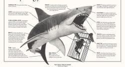 Shark-Infographic-FINAL-REG_fixedtype_51